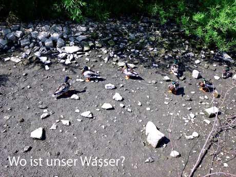 Enten suchen nach Wasser